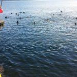 cimento invernale Arona lago Maggiore
