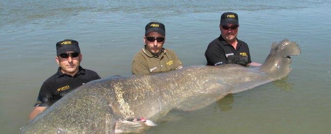 Pesce Siluro da Record pescato sul Lago Maggiore